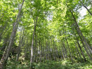 魚沼の木材