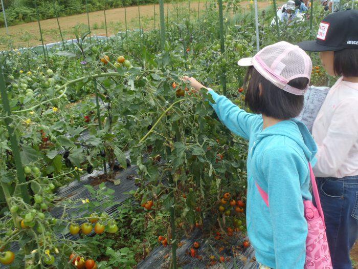 農園作物収穫体験
