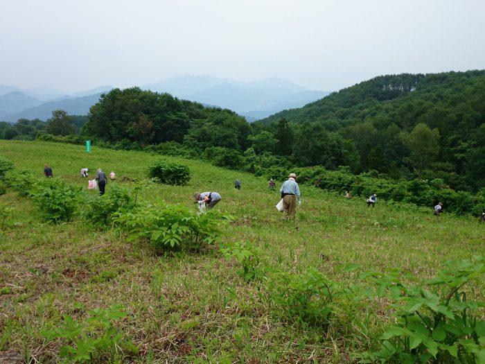 大白川で山菜採り