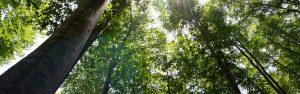 森のアーカイブ