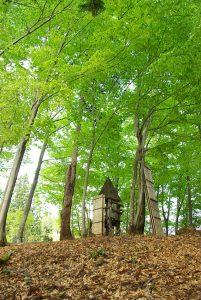 櫓とブナ新緑