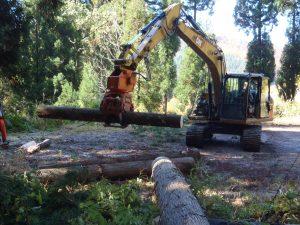 伐採現場見学